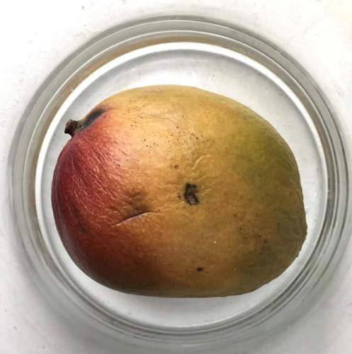 Mango-25