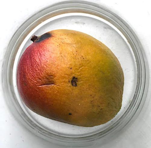 Mango-27