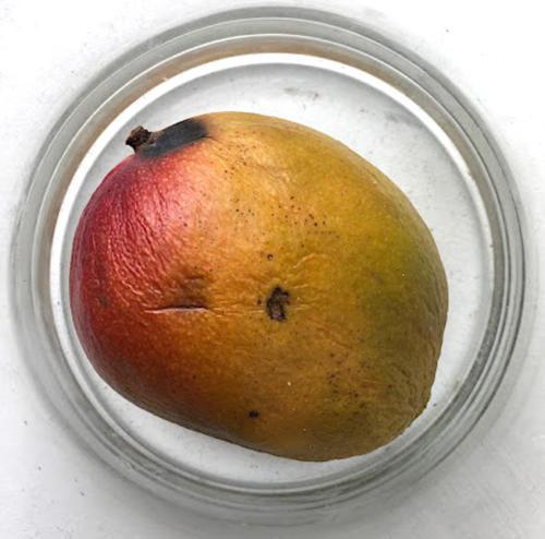 Mango-28