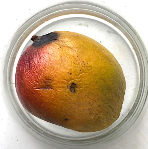 Mango-31