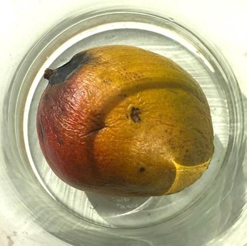 Mango-33
